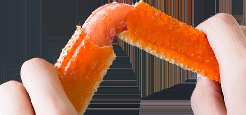 ズワイガニ脚を折っている画像
