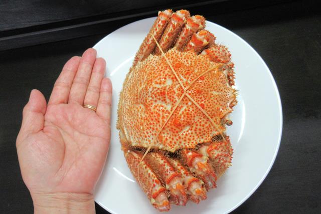 北海道ぎょれん 特大毛ガニ 大きさを手のひらとくらべる